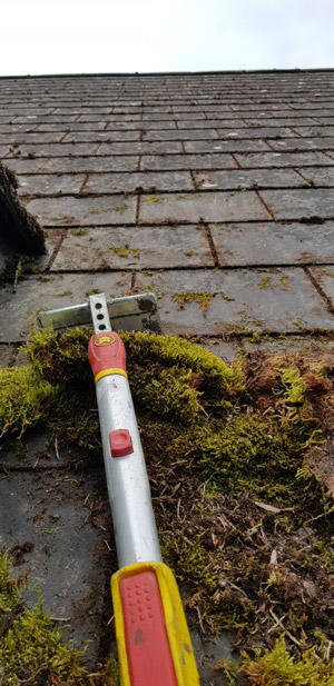 Moss Removal And Roof Cleaning